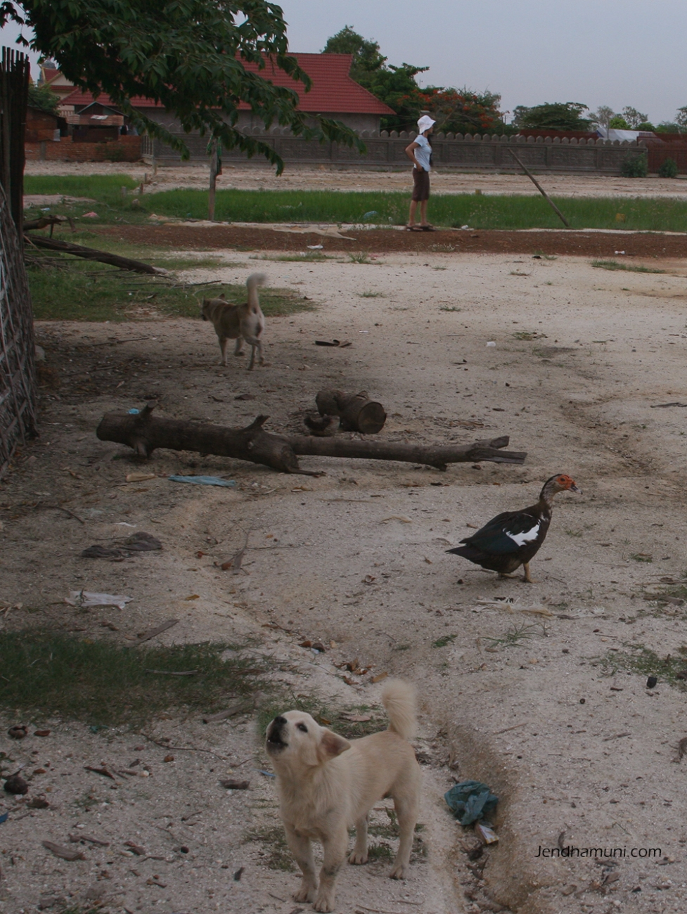 Jendhamuni with dogs