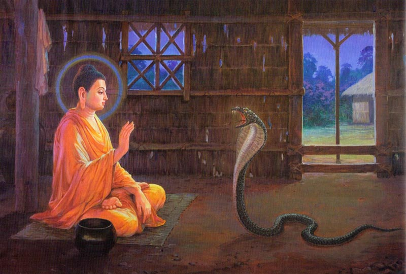 Buddha and snake071815