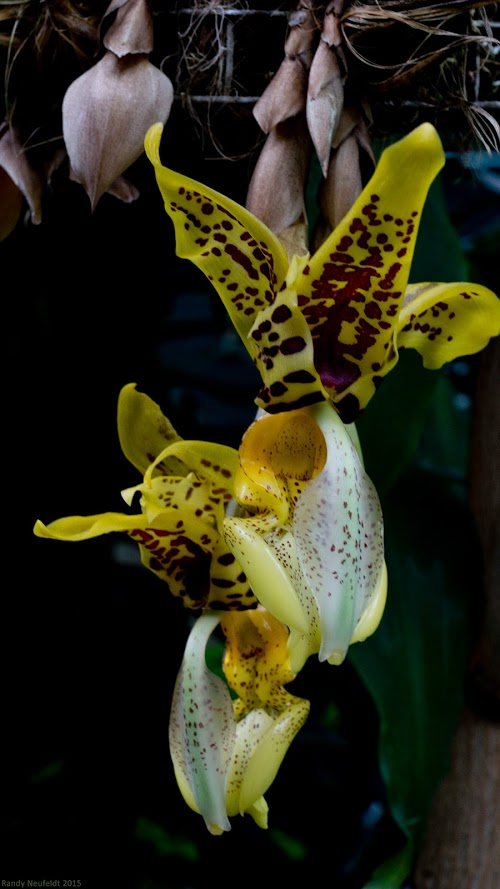 Alien Orchid. Photo credit: Randy Neufeldt